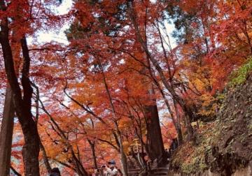 紅葉と漆喰