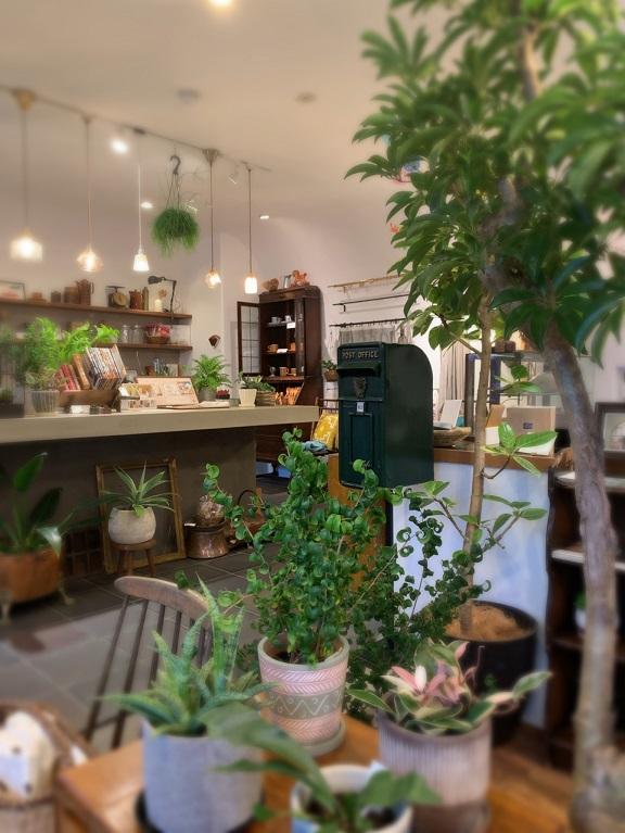 巣まいと暮らしのい店トリノスでグリーン展